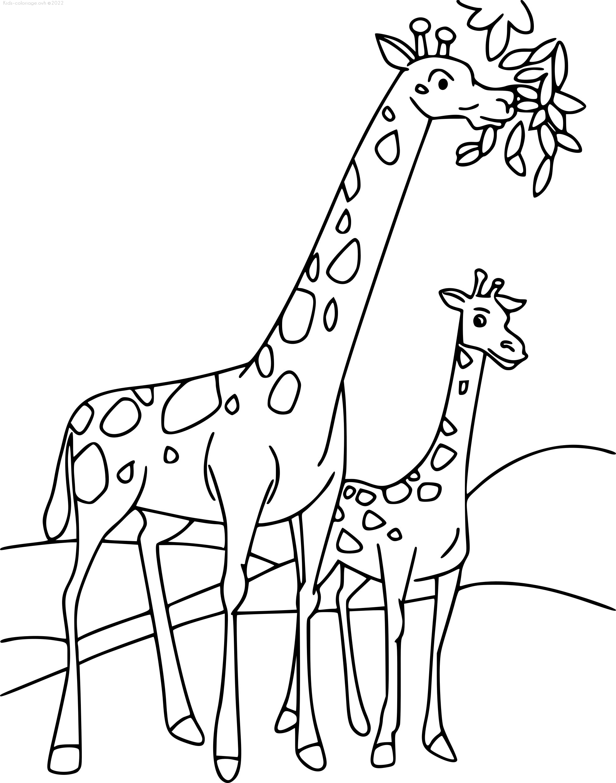 Beau Image Girafe Coloriage