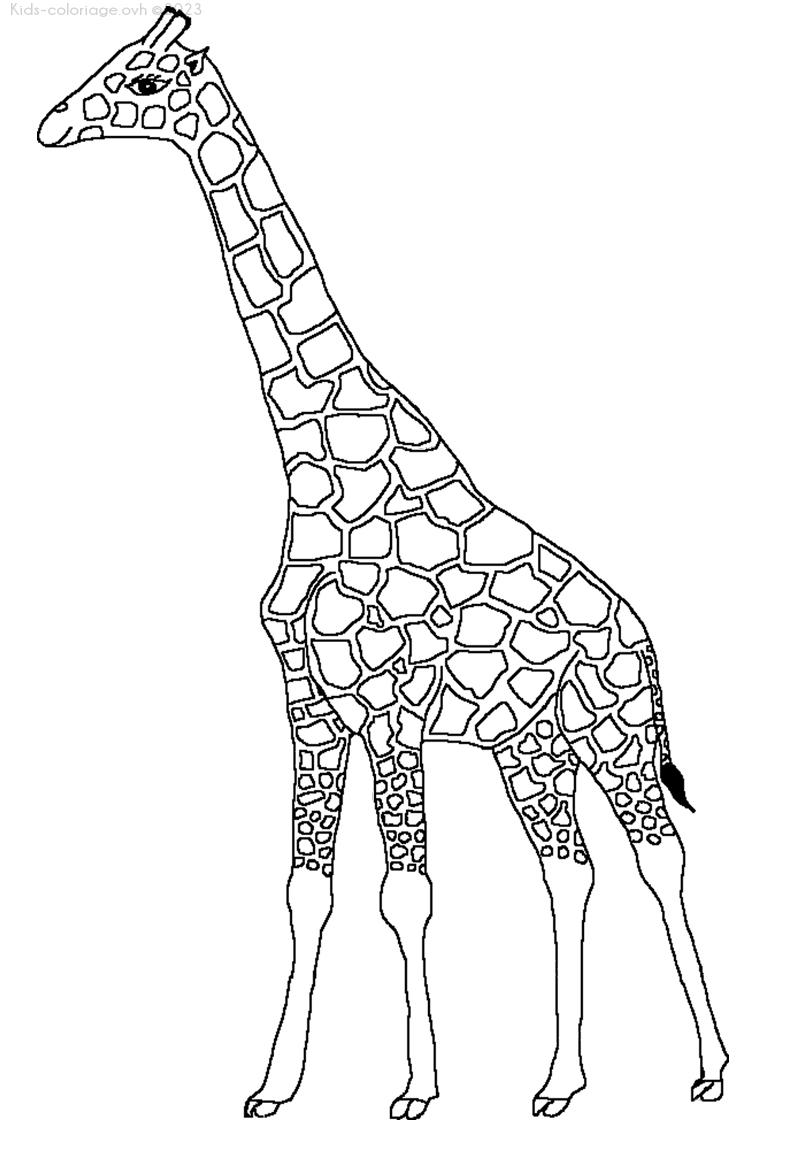 Coloriage à imprimer girafe-6