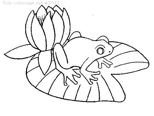 Coloriage imprimer grenouille nenuphar - Nenuphar dessin ...