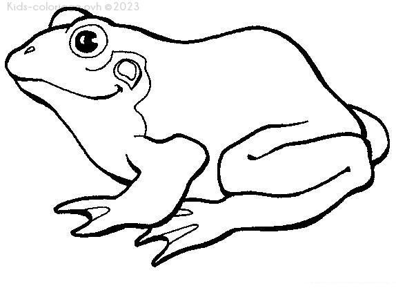 Coloriage imprimer grenouille profil - Dessin de grenouille a imprimer ...