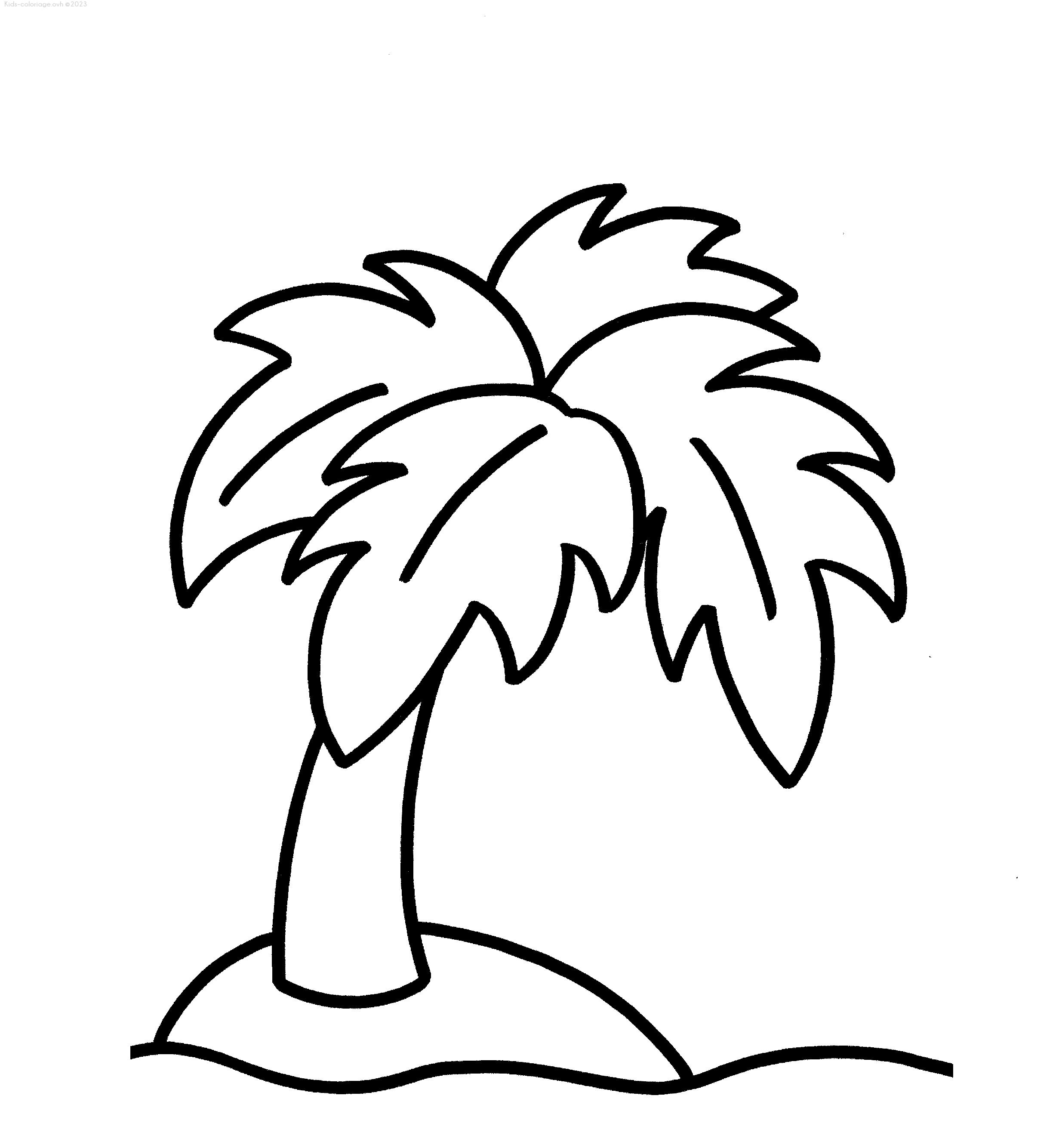 Coloriage imprimer palmier - Palmier dessin ...